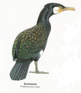 Komoran